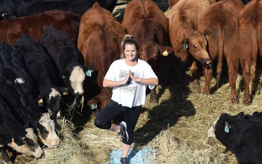Hensleigh Healthy Beef